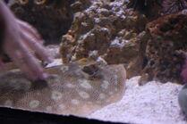 GA. Aquarium 035
