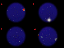 Rainbow Star Haven Star 2
