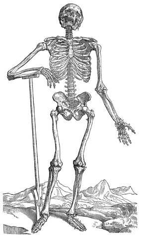 File:Skeleton-dug-his-own-grave.jpg