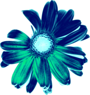 SkinSkin Flowers