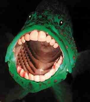 File:Äcklig fisk.jpg