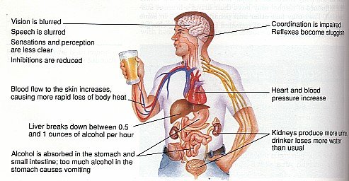 File:Alcohol effects.jpg