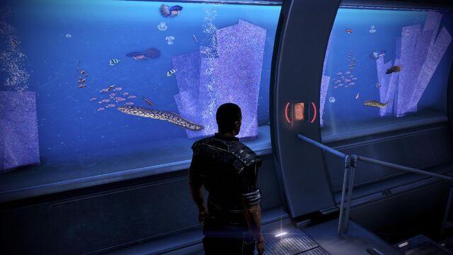 File:Aquarium plants.jpg