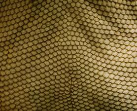 Dragonscale texture