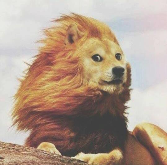 Doge lion