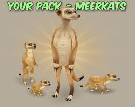 Meerkats icon