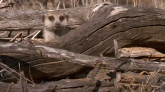 Bebe in Meerkat Secrets