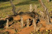 Baobab-3-16-2014-18-XL