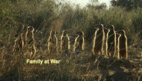 Family at war
