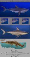 Shark alligator Lashelle 16