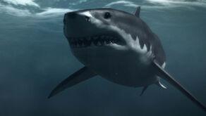 History Monsterquest Sn3 Evidence Mega Shark SF still 624x352
