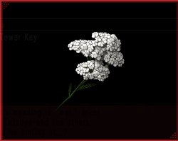 File:Achillea IS.png
