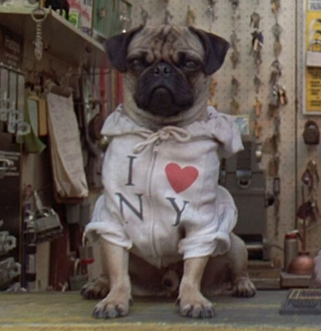 File:Frank-the-pug SS 01.jpg
