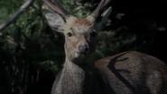 Deer or reindeer?