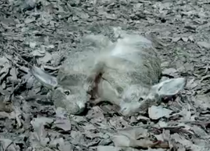 Rabbits ground