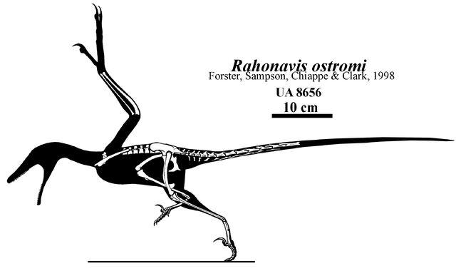 File:Rahonavis-ostromi-skeleton.jpg