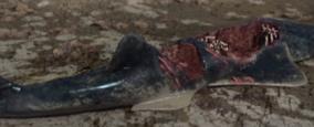 1000px-Onchopristis killed