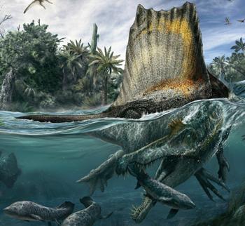 File:350px-Spinosaurus-restoration-990x912.jpg