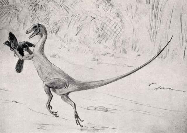 File:Ornitholestes-Charles-R -Knight.jpg