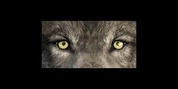 File:Ddog eye3.png