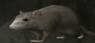 File:Rat.png