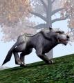 File:Alpha Grey Wolf.jpg