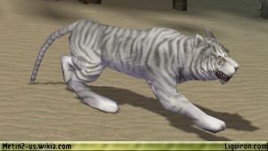 File:White Tiger 2.jpg
