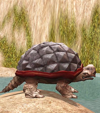 Giant Desert Tortoise