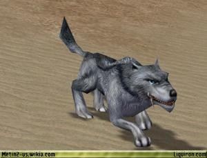 File:Hungry Alpha Blue Wolf 2.jpg