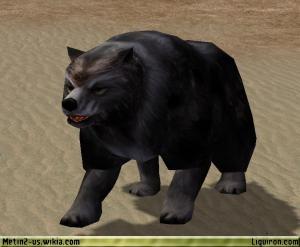 File:Black Bear 2.jpg