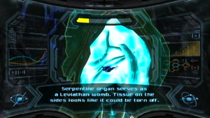 Leviathan womb scan