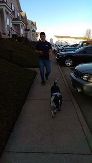 Robert dog walk