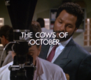 The Cows of October