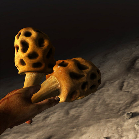 File:Sponge-like fungus in the hand.png