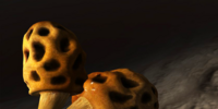Sponge-like fungus