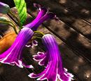 Tropical Buttercup