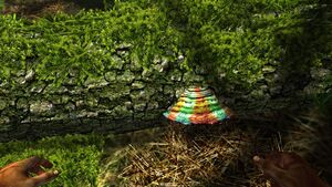 Red and green tree fungus