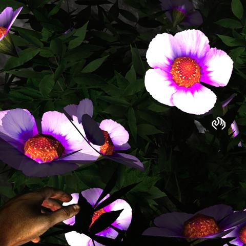 File:Indigo asteraceae.png