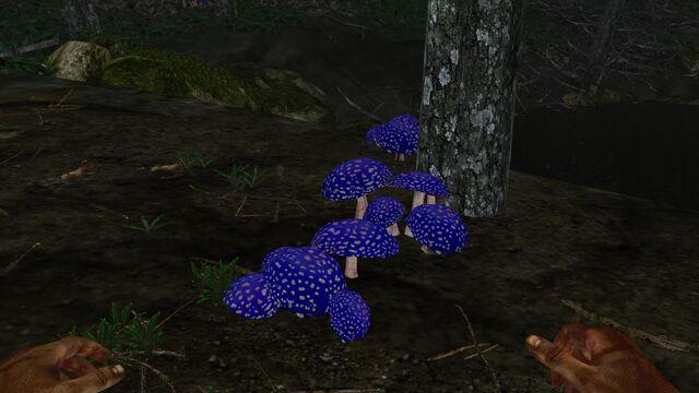 File:Blue capped mushroom.jpg