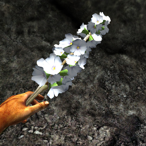 File:White-spiked prairie flower in hand.png
