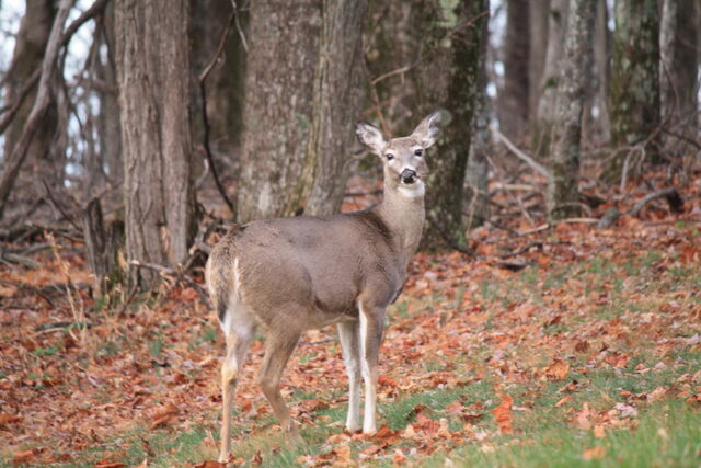 File:Maine-wildlife.jpg