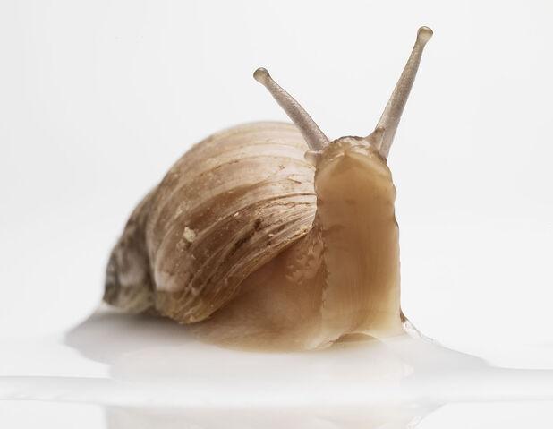 File:Sublime-Snail.jpg