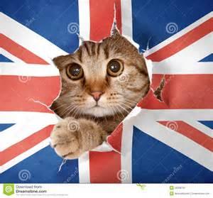 File:Cat Flag!.jpg