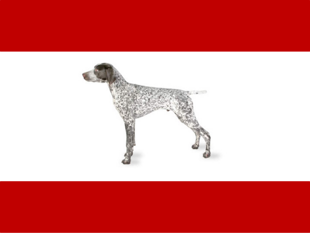 File:Flag of Rex.png