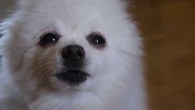 File:Gabe the dog.jpg