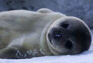 Seal611