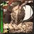 (Second) Mabonagrin Icon