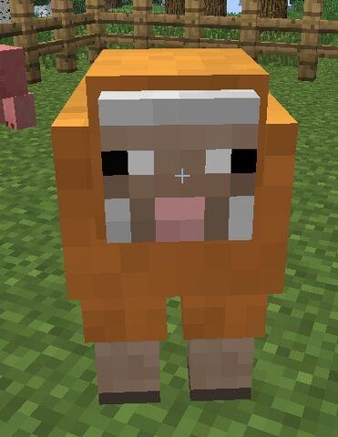 File:Orange sheep2.jpg