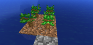 Dark Oak sapling formation