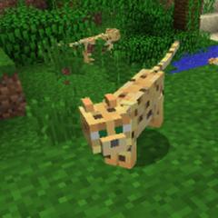 A Wild Ocelot
